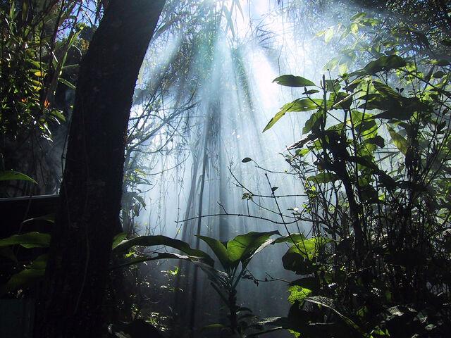 File:Jungle1.jpg