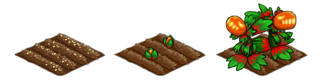 File:Dragon Fruit stages.png