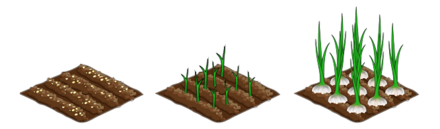 File:Garlic stages.png