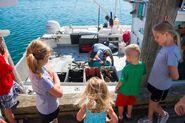 Re meetthefleet kids lobster