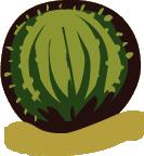 File:Round Cactus.png