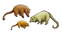 Anteater4