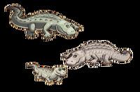 Alligator3