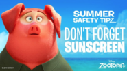 Don't Forget Sunscreen