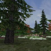 Preview borealforest