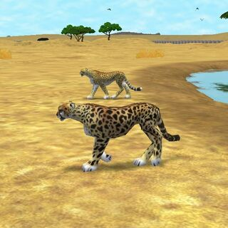 King Cheetah compared to normal <a href=