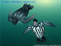 ZT2 MM - Leatherback Sea Turtle
