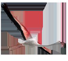 File:Flamingoc.png