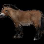 Przewalski's Horse (Aurora Designs)