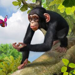 Central Chimpanzee