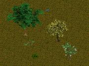 ZT1 Deciduous Forest