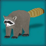RaccoonAvatar