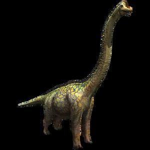 Sauroposiden