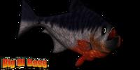 Piranha Grande