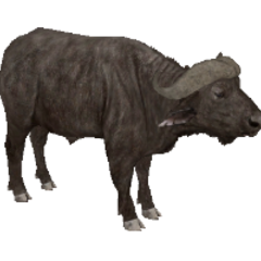 African Buffalo remake.