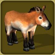 HorsePrzewalskis Adult F