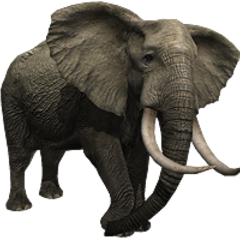 African Elephant remake.