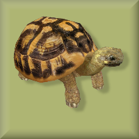 File:Tortoise.png