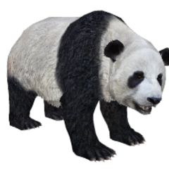 Giant panda remake.