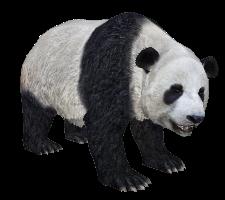 File:RR panda.png