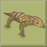 File:Geckonc.png