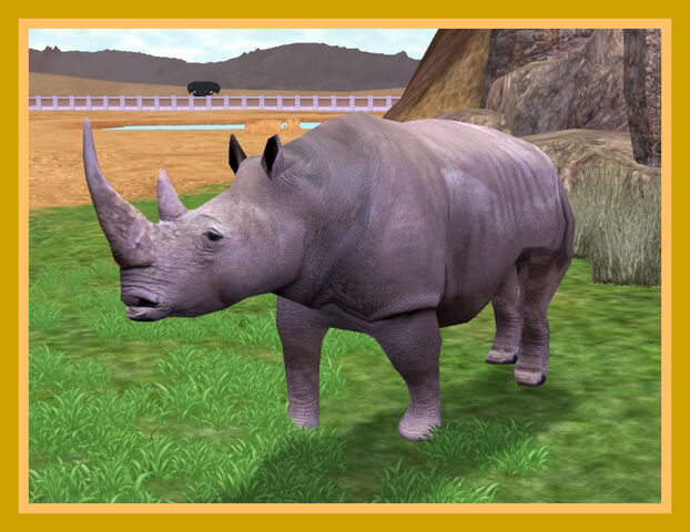 File:Northern White Rhinoceros.jpg