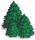 Group of Pine Trees-icon