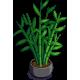Bamboo Plant-icon