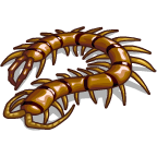 TropicalBugs Centipede-icon