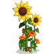 Sunflowers-icon