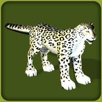 File:Snow Leopard.jpg