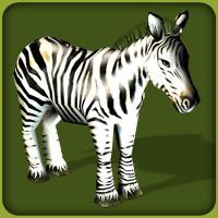 File:Common Zebra.jpg