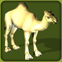 File:Dromedary Camel.jpg