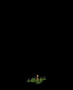 File:Tree 5 (Stump).png